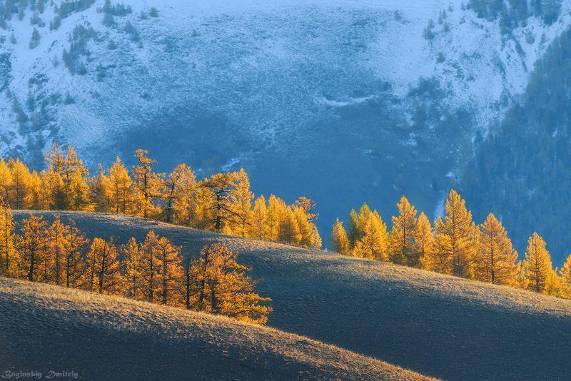 Алтайские склоны.photo preview