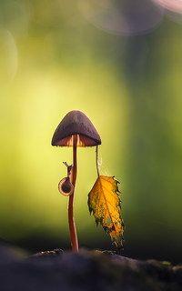 С осенью наедине