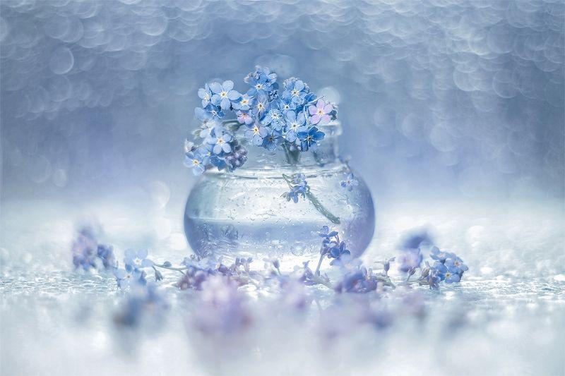 niezapominajki,kwiaty,flowers,natura,nature,bokeh photo preview