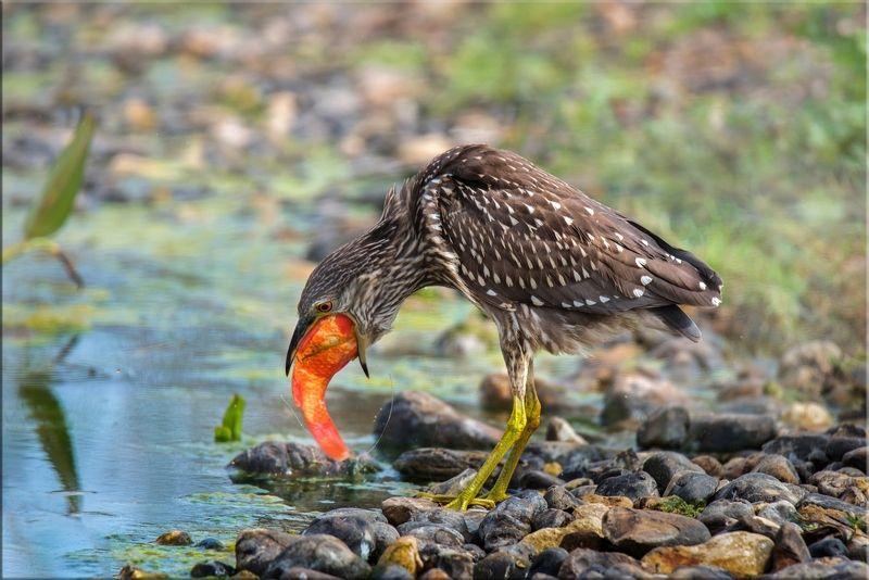 кваква Невкусная рыбкаphoto preview