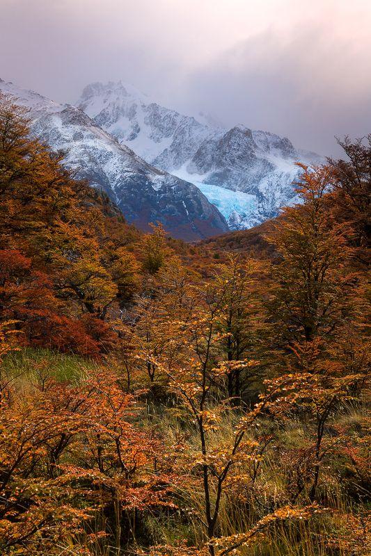 landscape mountain scenery glaciar autumn trees Glaciar Piedras Blancas. Los Glaciares National Park. El Chalten. Argentinaphoto preview