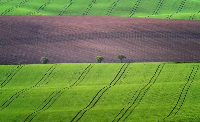 моравия, moravia, green fields, lines, spring, czech republic, hills Законы геометрииphoto preview