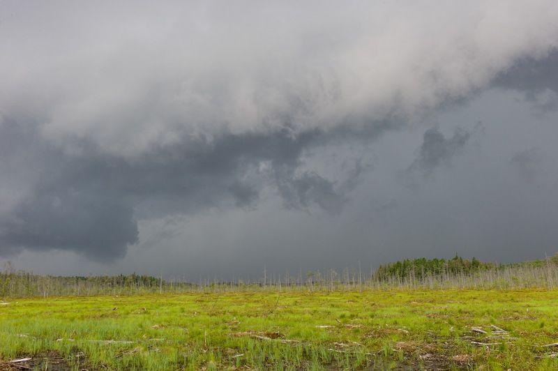 Западная Сибирь Томская область васюганское болото  васюганское болотоphoto preview