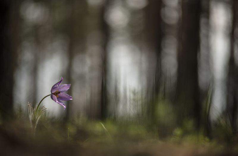 сон трава, свет, цвет, апрель, весна, воронеж, маклок, геннадий мещеряков, nikon d 850 Сон в пасмурное утро...photo preview