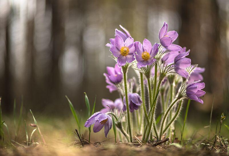 сон трава, свет, цвет, весна, апрель, маклок, воронеж, геннадий мещеряков Букет снов...photo preview
