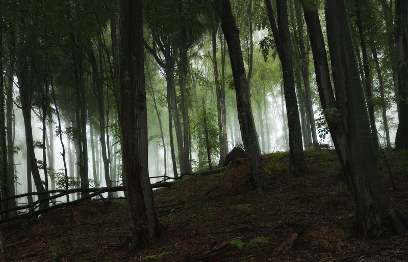landscape, forest, tree, wide angle, fog, mist, mountain, woods, spring, bulgaria, nature, green, plant, weed, leafs, dream Forest Windowphoto preview