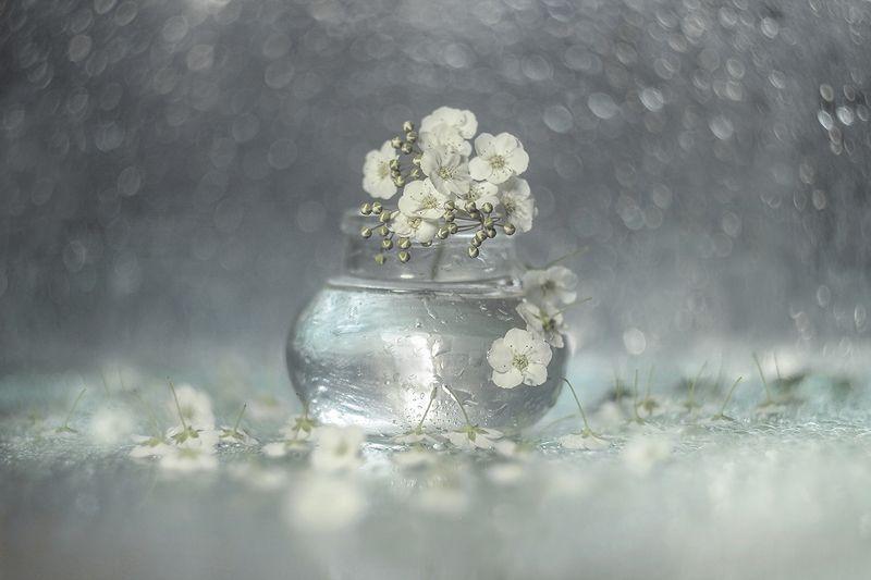 tawuła,kwiaty,flowers,macro,bokeh, Tawułaphoto preview