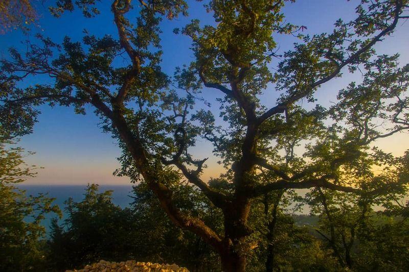 пейзаж, лето, тепло, дерево, закат, солнце, море На закате дняphoto preview