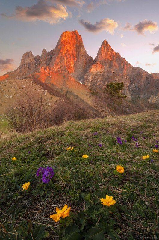 первоцветы у Цей-Лоамphoto preview