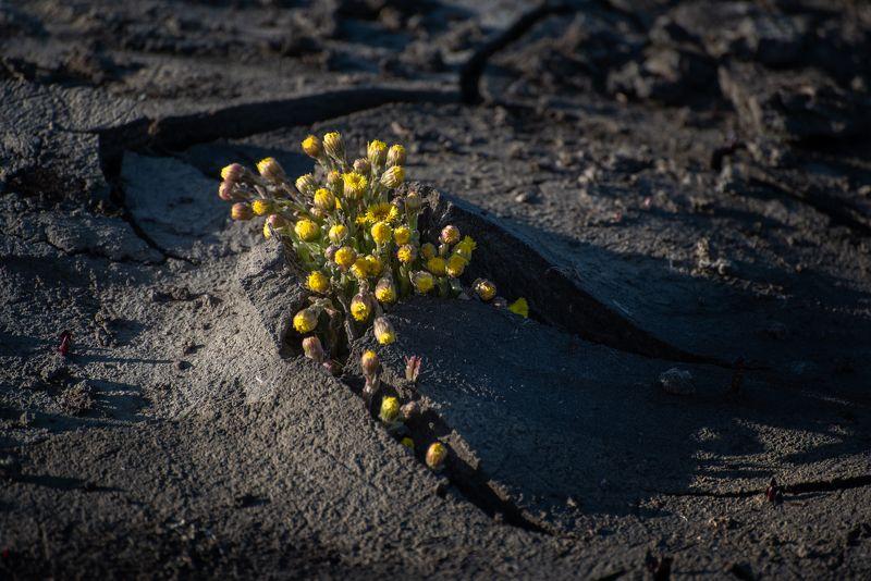 #весна #пролог #алтай #жизнь #энергия Прологphoto preview