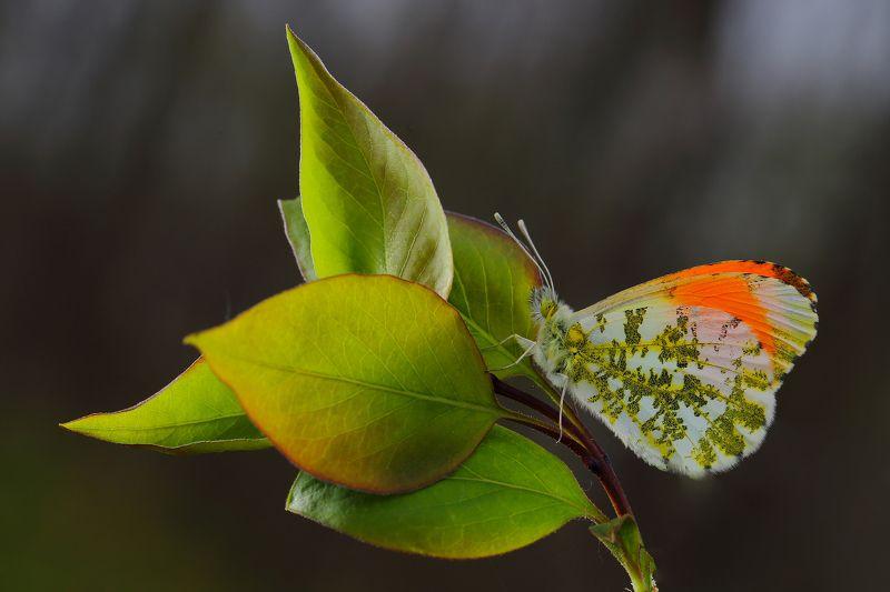 макросьемка Прозрачная веснаphoto preview