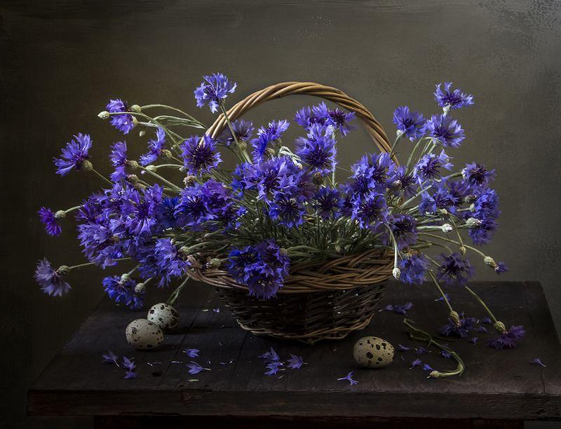 натюрморт, цветы, still life Василькиphoto preview