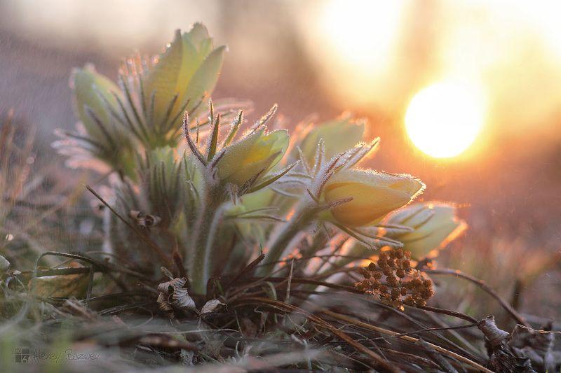 Весенний букет. photo preview