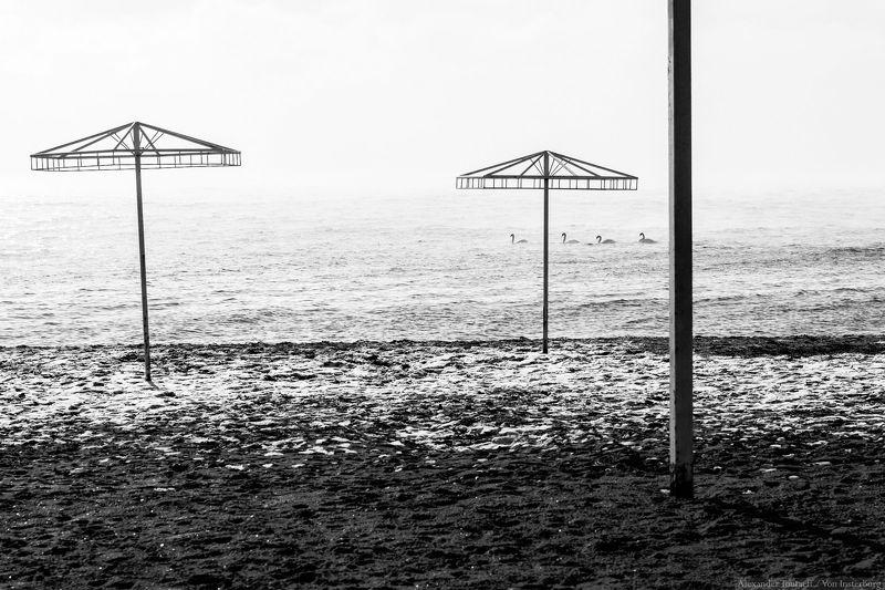 море, пейзаж, ч/б, монохром, минимализм, seascape, sea, minimalism, monochrome, blackandwhite, swans, птицы, лебеди ***photo preview