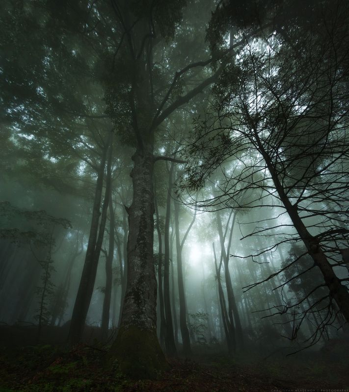landscape, forest, tree, wide angle, fog, mist, mountain, woods, spring, bulgaria, nature, green, plant, weed, leafs, dream, panorama, woodland, gora, mountain, Enchanted Forestphoto preview