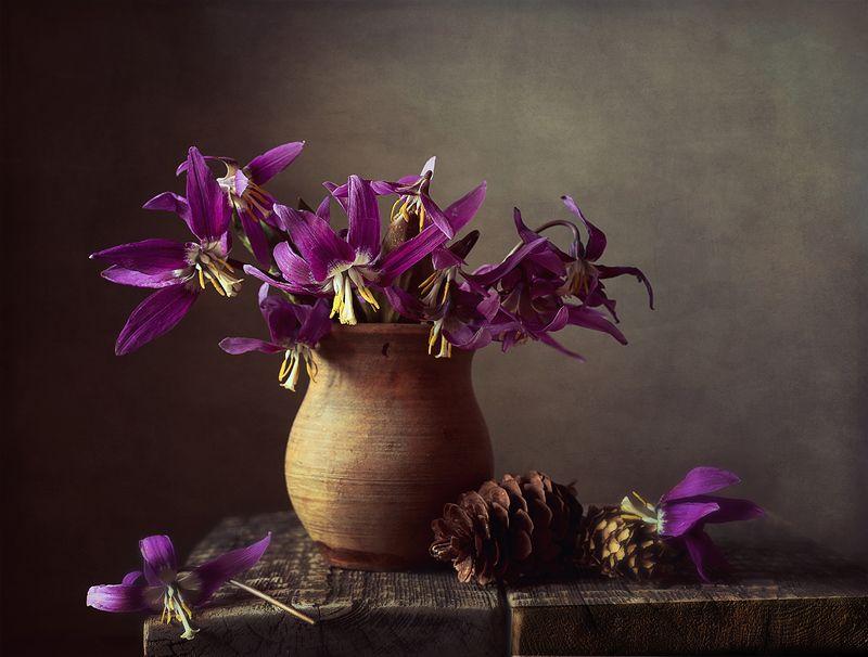 Таежные цветыphoto preview