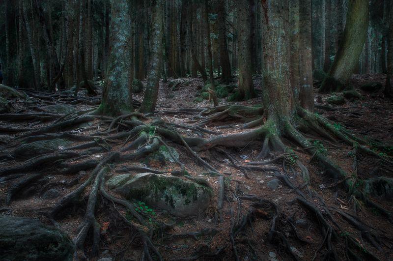 лес, природа, пейзаж, Таинственный лесphoto preview