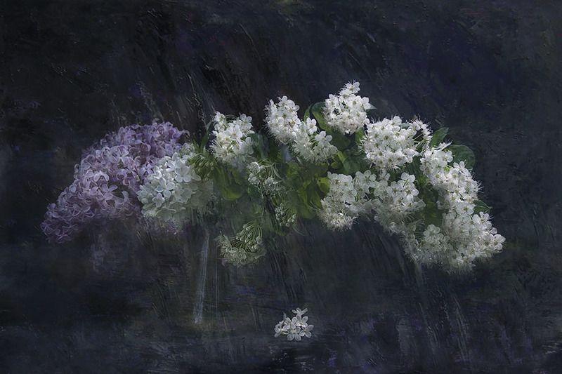 белые цветыphoto preview