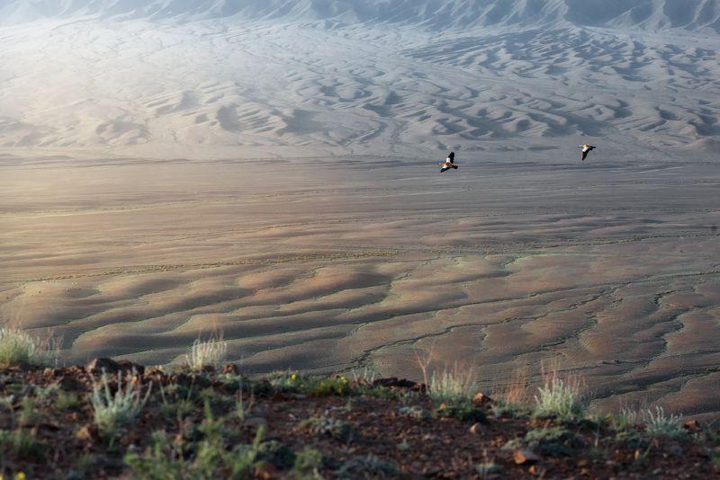 птицы, утки, полёт, горы, утро, рассвет, холмы И только ветер в небесах способен крылья их расправить... во всю длинуphoto preview