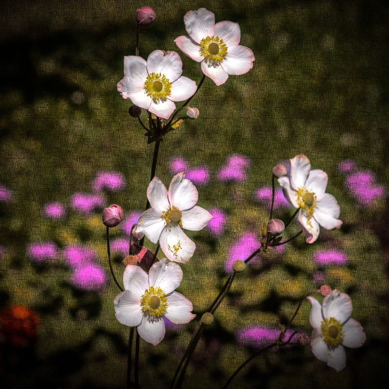 цветок цветокphoto preview