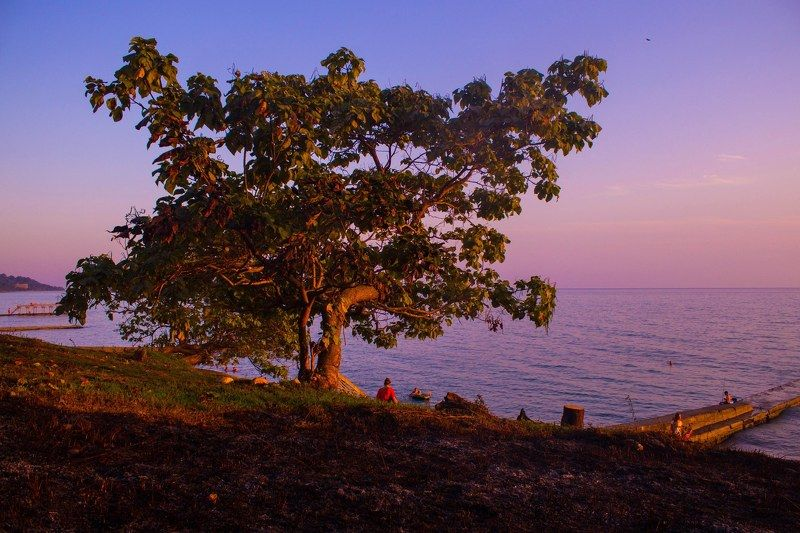 закат, море, эвкалипт, деревья, тепло, солнце, небо Тёплые краски закатаphoto preview