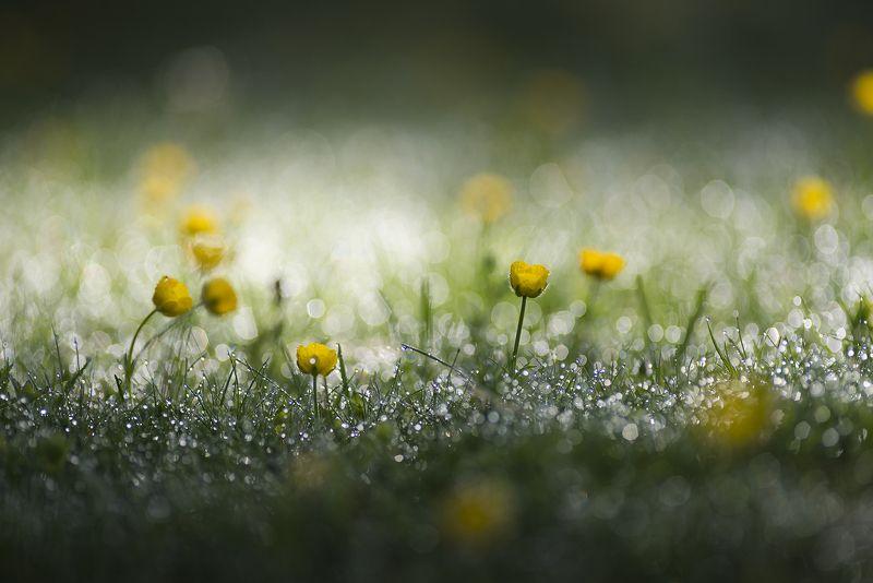 macro Утренний свет через росистую лужайкуphoto preview