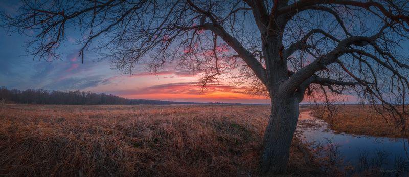 дерево, рассвет, краски, весна, апрель, ветвь, дуб Апрельское утроphoto preview