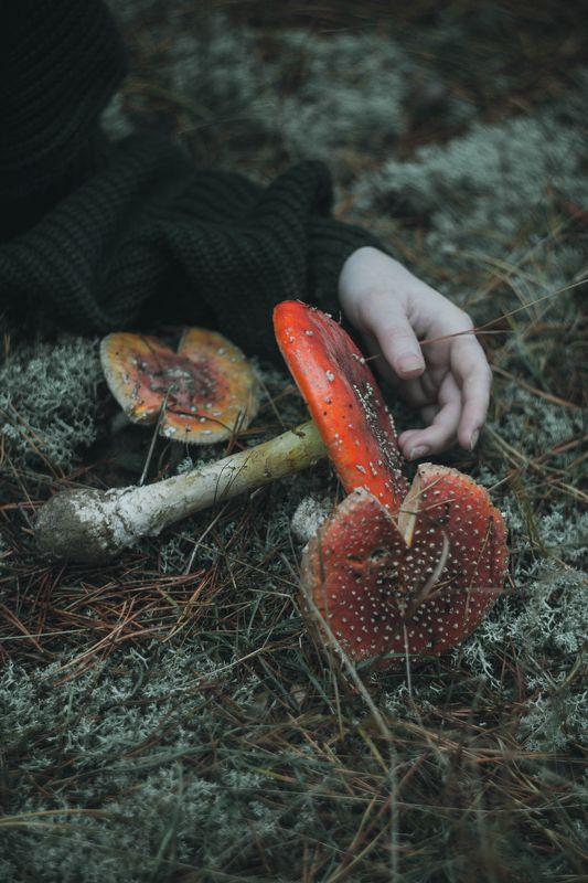 autumn( 2)photo preview