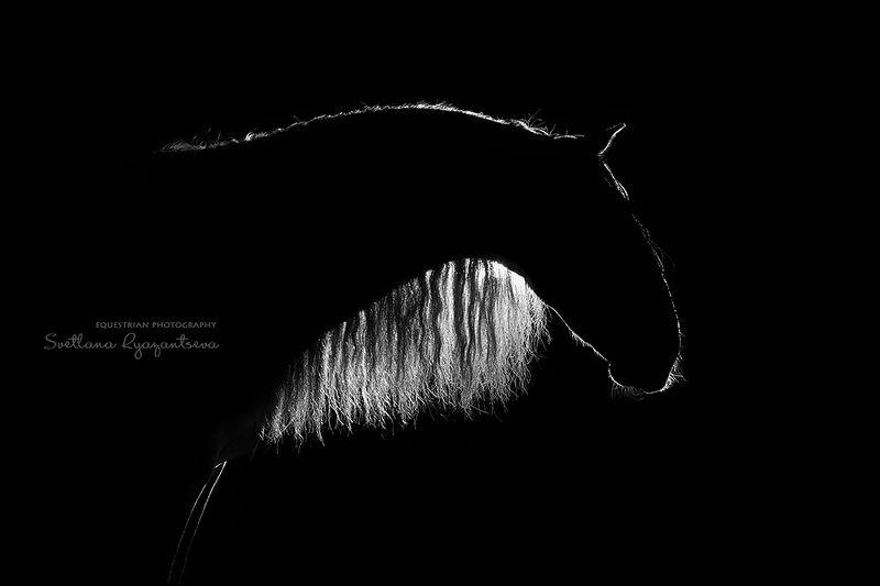 horse, лошадь, лошади, portrait Drawn by Lightphoto preview