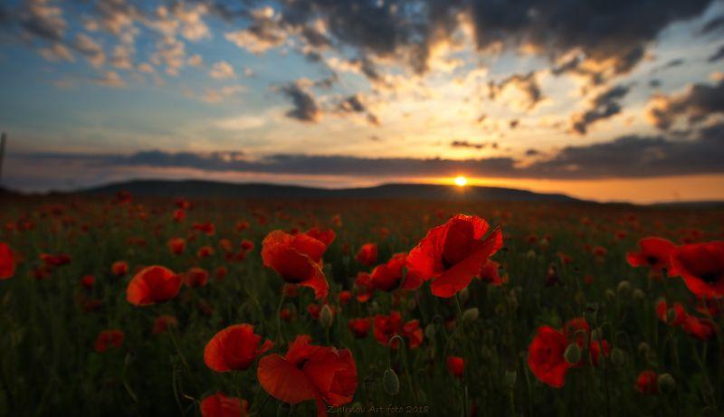 закат, маки, лето, русское поле, крым, Русское полеphoto preview
