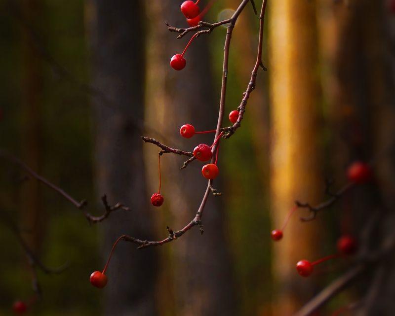 лес,плод,дичка,осень photo preview
