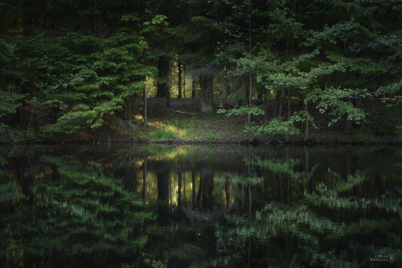 лес, отражение, река, сергиевка, парк, ленинградская область, кристателька Эхоphoto preview