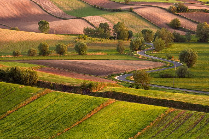 country, village, ground, meadow, road, agriculture, tree, sunset Land of gentlenessphoto preview