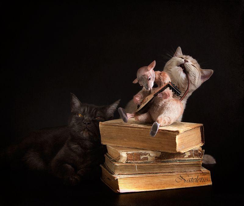 Кошки-Мышкиphoto preview