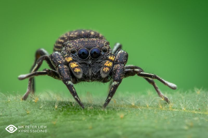 #macro, #spider, #staring, #nature, #npl Staring at Youphoto preview
