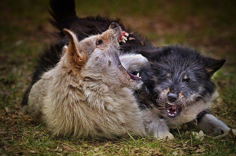 Игры городских волков.photo preview