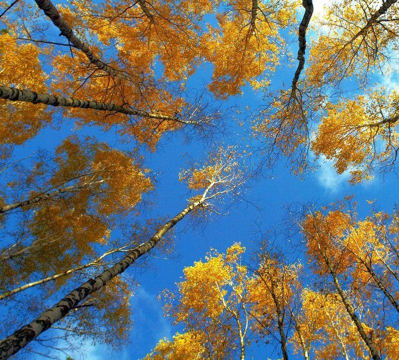 Осень фото открытки, анимации поздравление