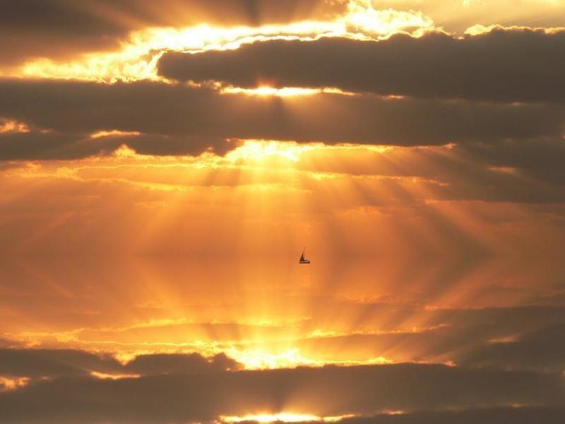Плавая в лучах солнца..photo preview