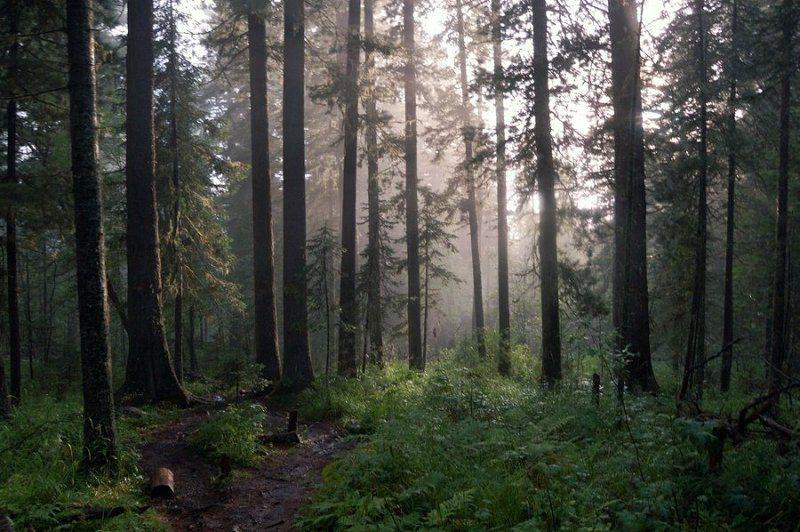 лес, дождь, свет, алтай, каракольские, озера Возвращение солнцаphoto preview