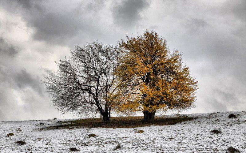 осень,зима Осенне-зимняя парочкаphoto preview