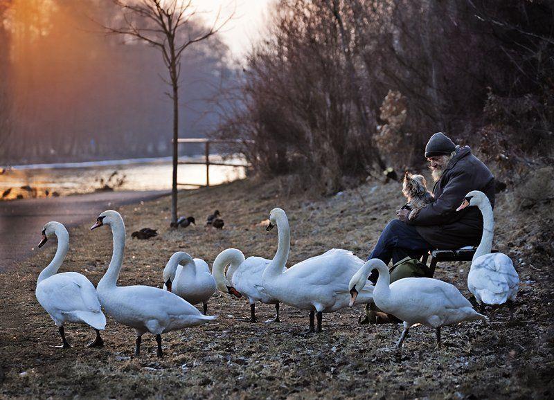 одиночество, старик, лебеди, собака Не один.photo preview