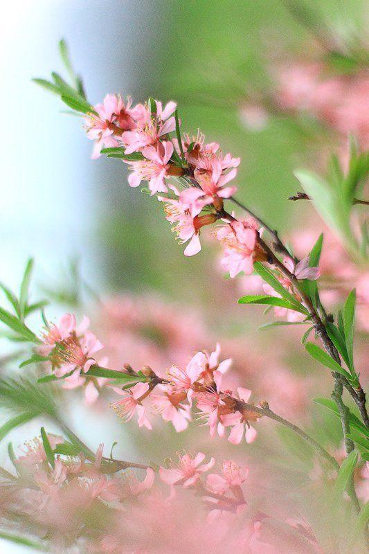 Нежные краски весны...photo preview