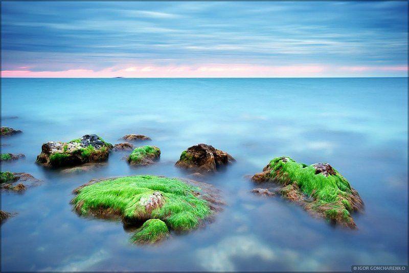море, пейзаж, крым, водоросли, Водорослиphoto preview