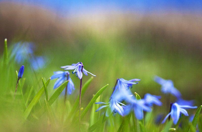 цветы, май, жизнь Первоцветы.photo preview