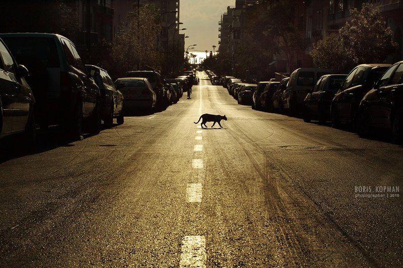 кот, вечер, дорога untitledphoto preview