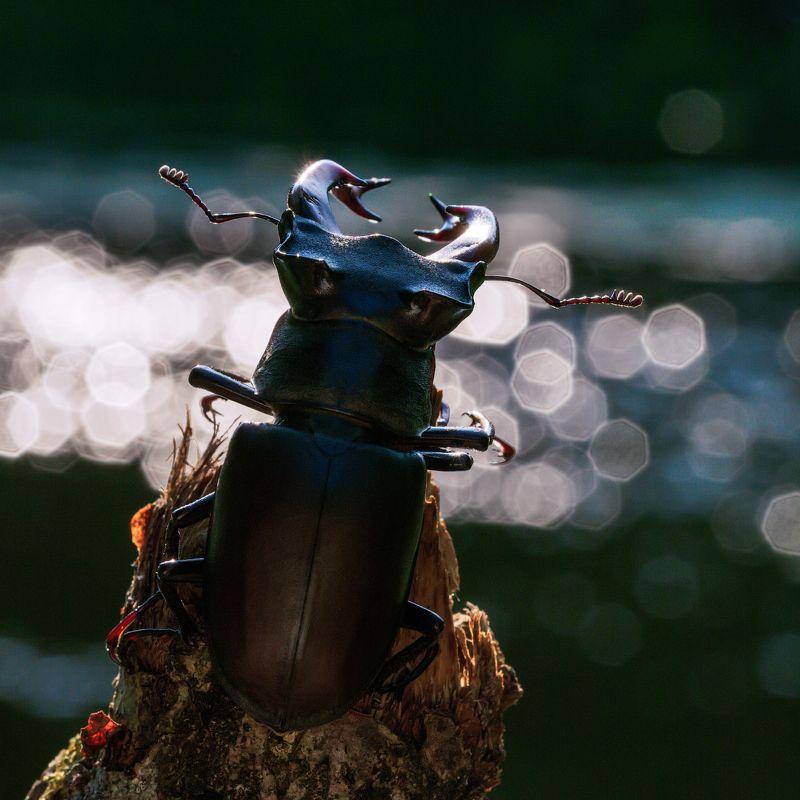Жук - олень, сидящий на берегу реки и размышляющий о жизни.photo preview