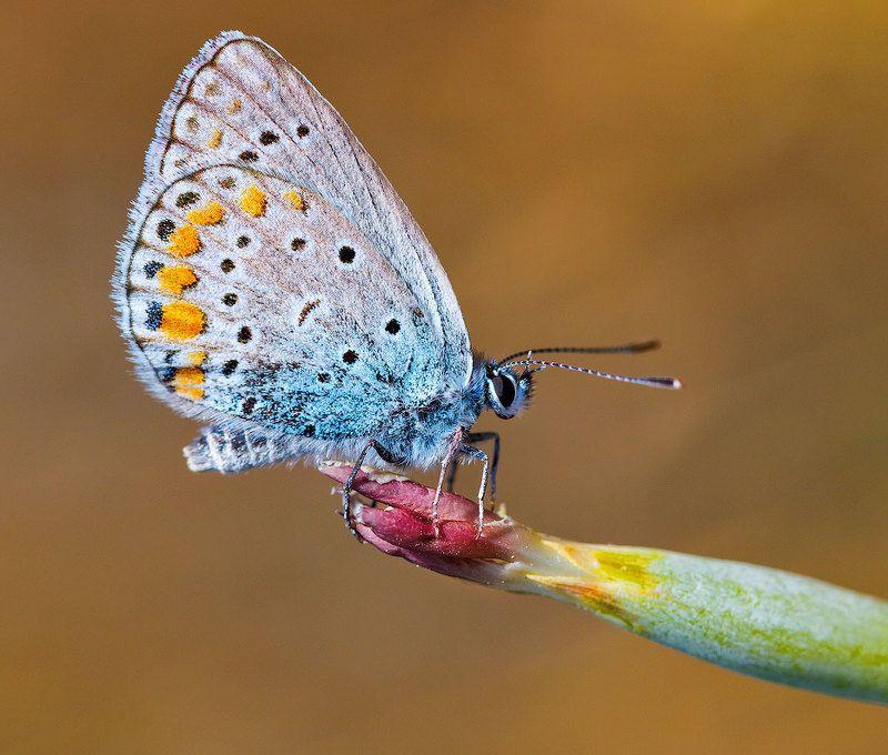 Очень маленькая бабочкаphoto preview