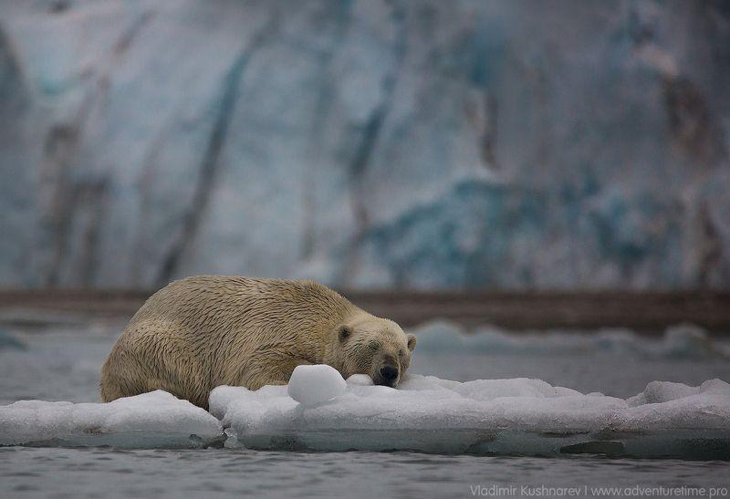 Svalbardphoto preview