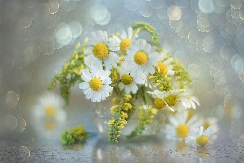 kwiaty,polne,rumianek,lato,bokeh Kwiaty polnephoto preview