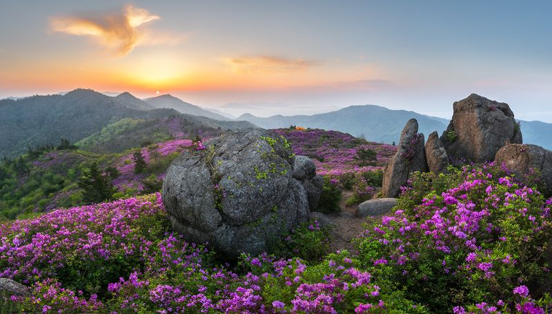 flowers,  mountain range The spring of Choamsanphoto preview